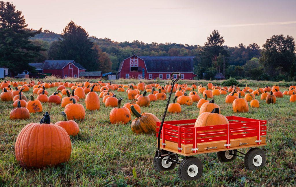 pumpkin work wagons