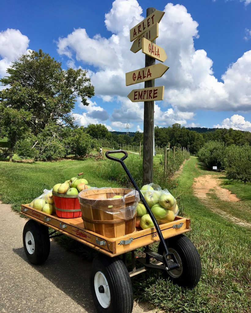 farm wagon with apples 1